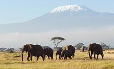 Combiné séjour kitesurf à Zanzibar et 4 jours de visite des parcs tanzaniens et du Kilimandjaro.
