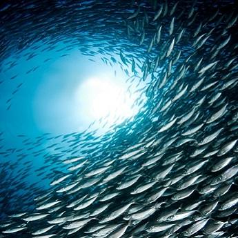 Visuel Promotion séjour plongée à Bonaire au Buddy Dive Resort