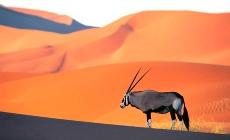 Afrique et safari